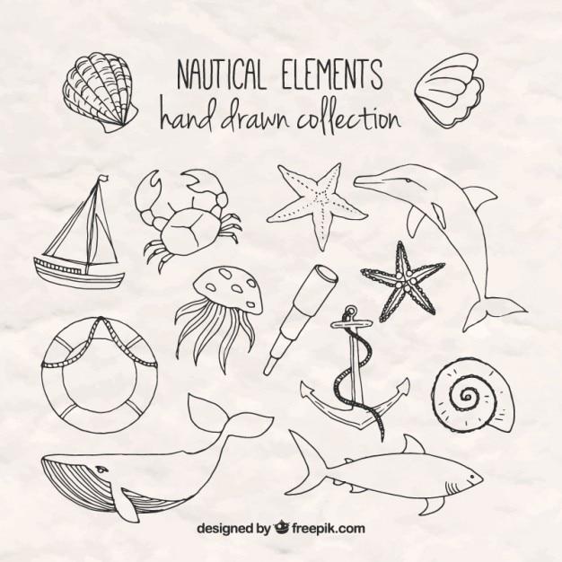 Hand gezeichnet salor elemente Kostenlosen Vektoren