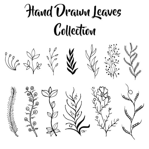 Hand Gezeichnet Schwarz Weiß Blätter Sammlung Download Der