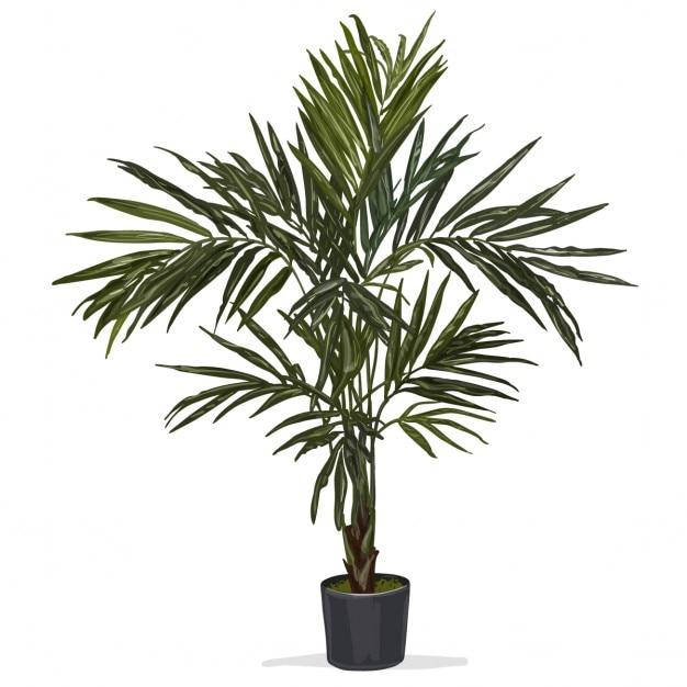 Hand gezeichnet vektor palme Kostenlosen Vektoren