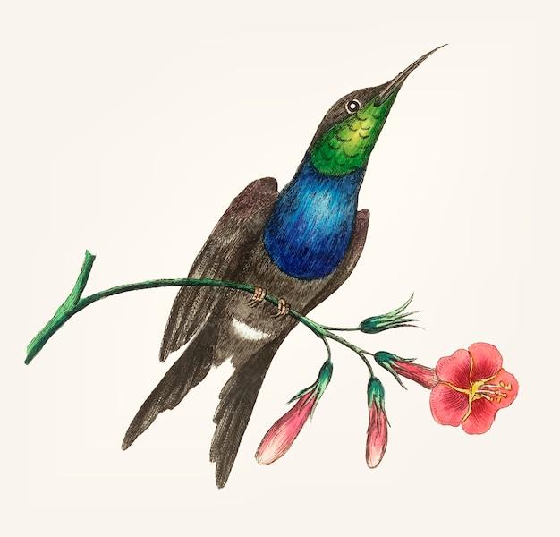 Hand gezeichnet vom kolibri Kostenlosen Vektoren