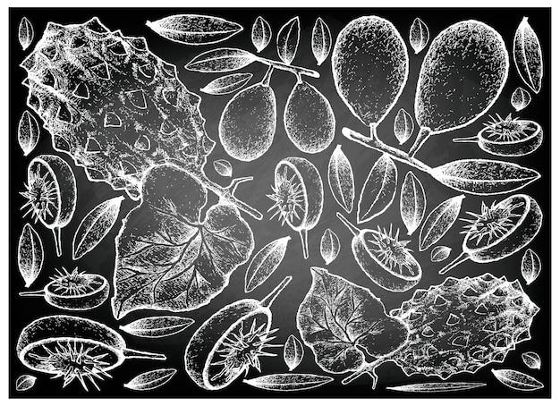 Hand gezeichnet von ambarella und gehörnte melone auf tafel Premium Vektoren