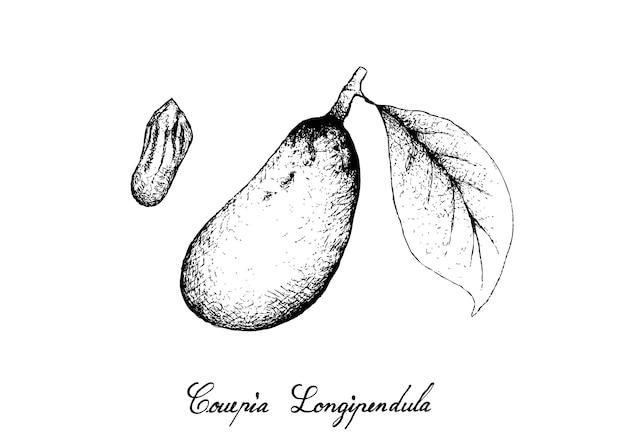 Hand gezeichnet von frucht couepia longipendula auf baum-bündel Premium Vektoren