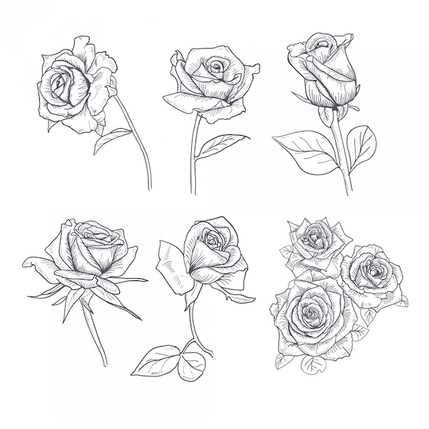 Hand gezeichnete blumen-gesetzte rose collection Premium Vektoren