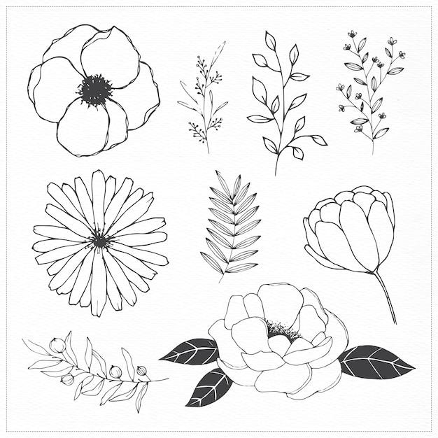 Hand gezeichnete Blumen und Blätter illutsrations | Download der ...