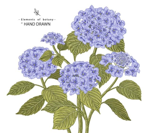 Hand gezeichnete botanische illustrationen hortensienblumenlinienkunst lokalisiert auf weißem hintergrund. Premium Vektoren