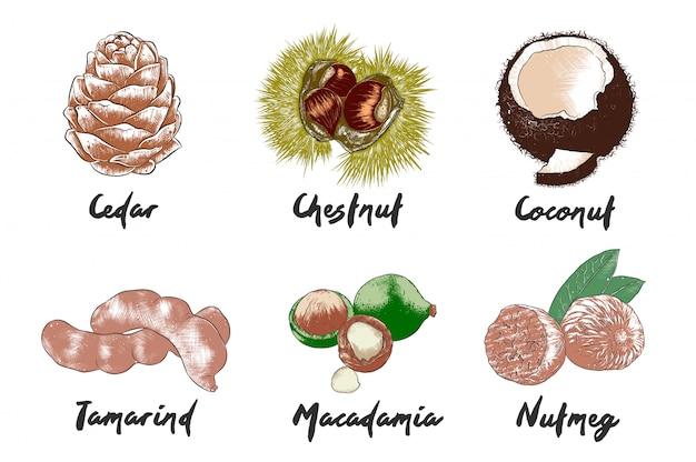 Hand gezeichnete bunte skizzen des lebensmittels Premium Vektoren