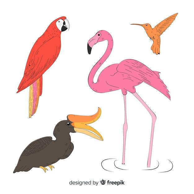 Hand gezeichnete exotische vogelsammlung Kostenlosen Vektoren