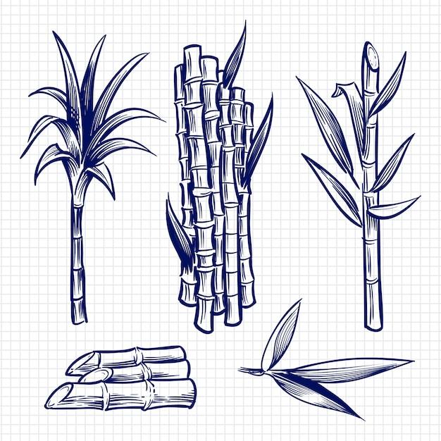 Hand gezeichnete gesetzte illustration des zuckerrohrs Premium Vektoren