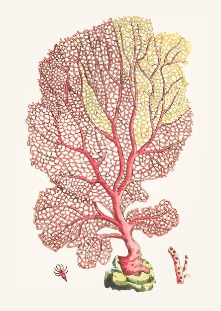 Hand gezeichnete gorgonian fan koralle Kostenlosen Vektoren