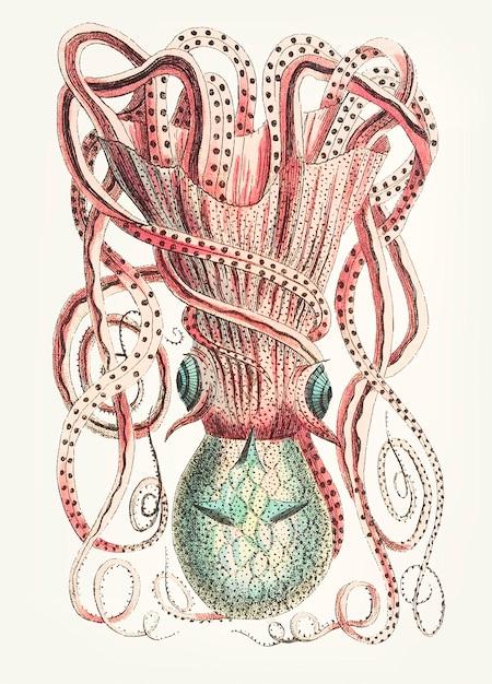 Hand gezeichnete granulierte tintenfische Kostenlosen Vektoren