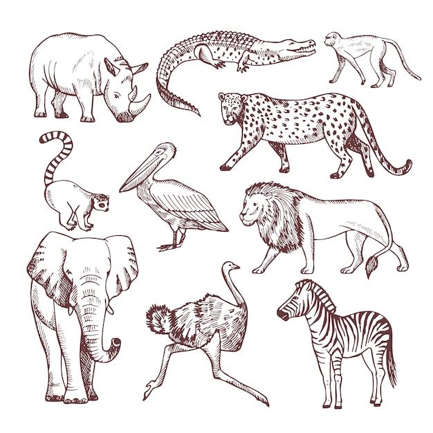 Hand gezeichnete illustrationen von afrikanischen tieren Premium Vektoren