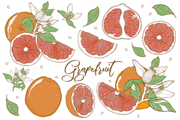 Hand gezeichnete illustrationen von schönen orange früchten. Premium Vektoren
