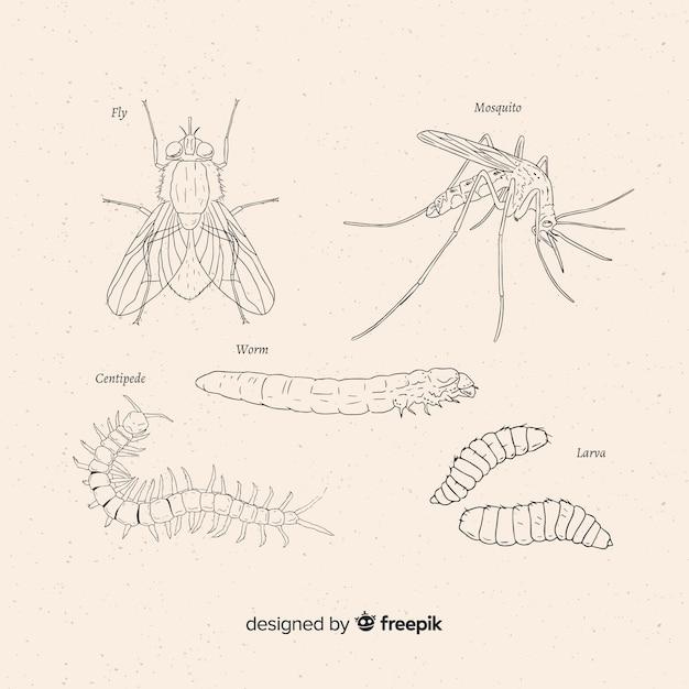 Hand gezeichnete insektenskizzensammlung Kostenlosen Vektoren