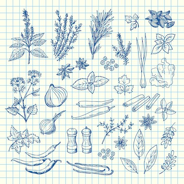 Hand gezeichnete kräuter und gewürze auf zellblattillustration Premium Vektoren