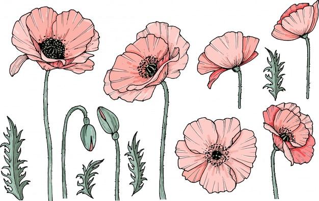 Hand Gezeichnete Mohnblume Eps Illustration Mohn Droge Symbol Auf Weissem Hintergrund Isoliert Gekritzelzeichnung Blumendesign Strichzeichnungen Premium Vektor
