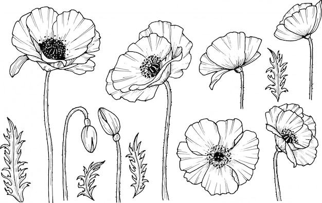 Hand Gezeichnete Mohnblume Mohn Droge Symbol Auf Weissem Hintergrund Isoliert Gekritzelzeichnung Blumendesign Strichzeichnungen Premium Vektor