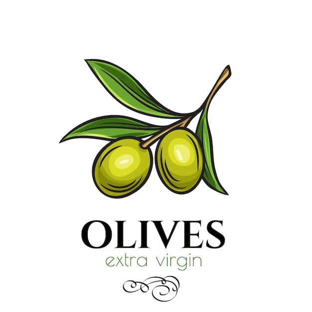 Hand gezeichnete olivenikone Premium Vektoren