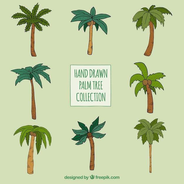 Hand gezeichnete palmen satz von verschiedenen arten Kostenlosen Vektoren