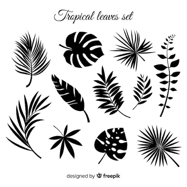 Hand gezeichnete sammlung tropische blätter Kostenlosen Vektoren