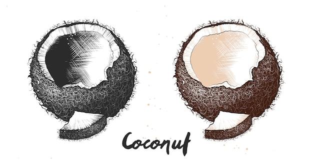 Hand gezeichnete skizze der kokosnuss Premium Vektoren