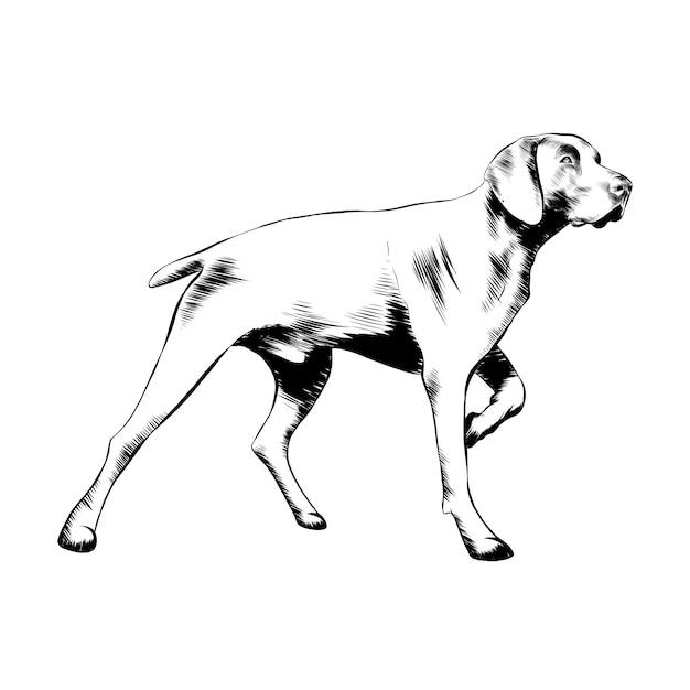 Hand gezeichnete skizze des jagdhundes im schwarzen Premium Vektoren