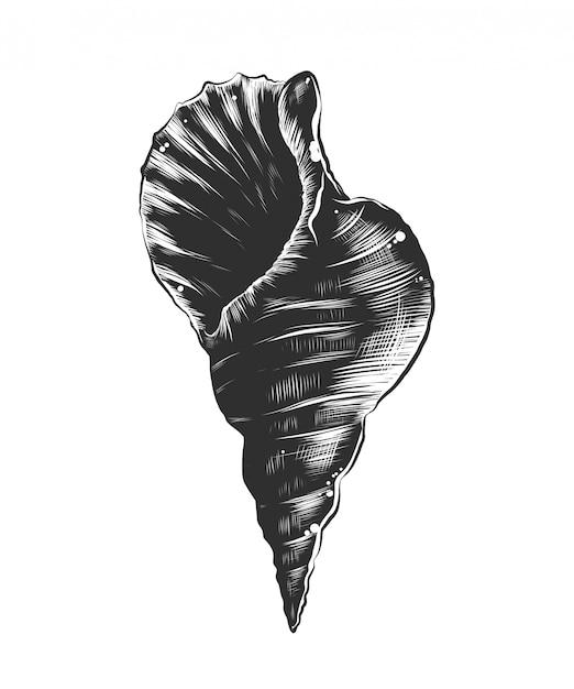 Hand gezeichnete skizze des seeoberteils im monochrom Premium Vektoren
