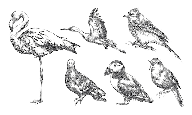 Hand gezeichnete skizze satz von vögeln. das set enthält storch, flamingo, spatz, nachtigall, adler und tukan Premium Vektoren