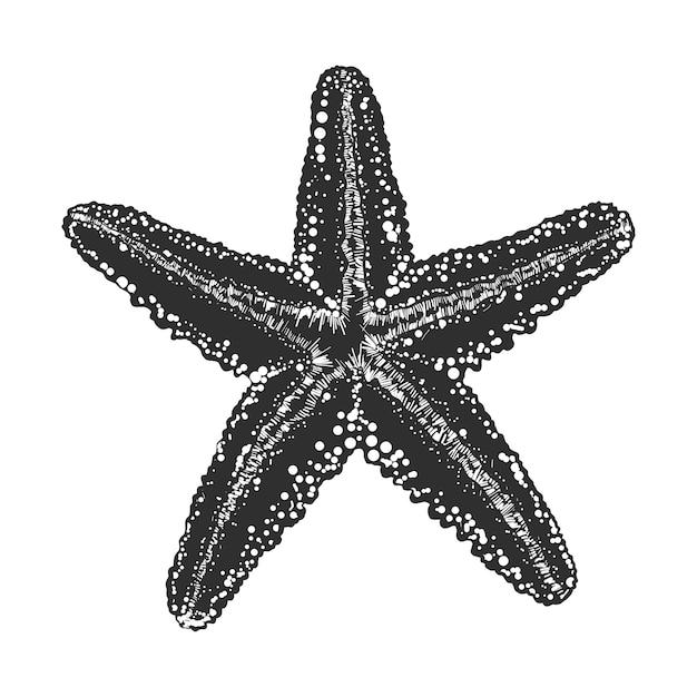 Hand gezeichnete skizze von starfish im monochrom Premium Vektoren