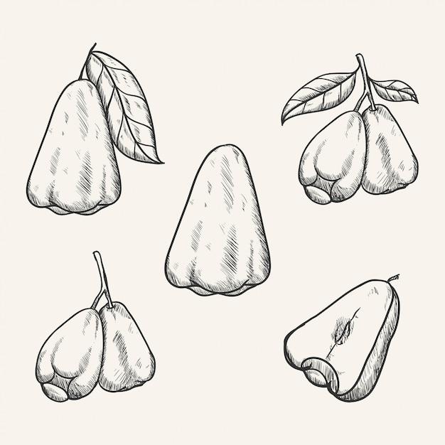 Hand gezeichnete skizzenillustration der rosenapfelfruchthand Premium Vektoren