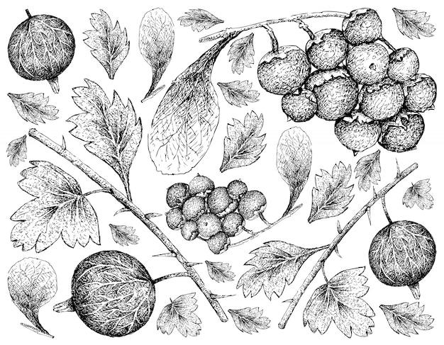 Hand gezeichnete tapete von reifen stachelbeeren und von manjackfrucht-hintergrund Premium Vektoren