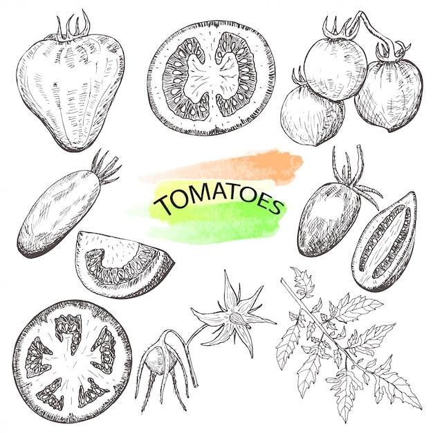 Hand gezeichnete tomaten stellten lokalisiert auf weißem hintergrund ein. Premium Vektoren
