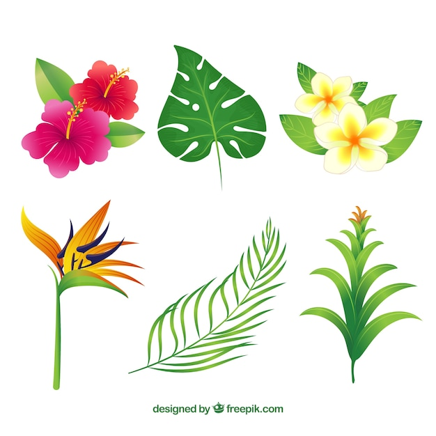 Hand gezeichnete tropische blumensammlung von sechs Kostenlosen Vektoren