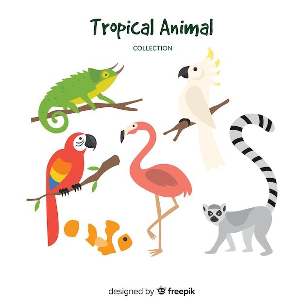 Hand gezeichnete tropische tiersammlung Kostenlosen Vektoren