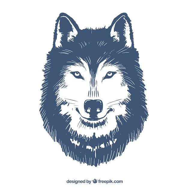 Hand gezeichnete wolf illustration Kostenlosen Vektoren