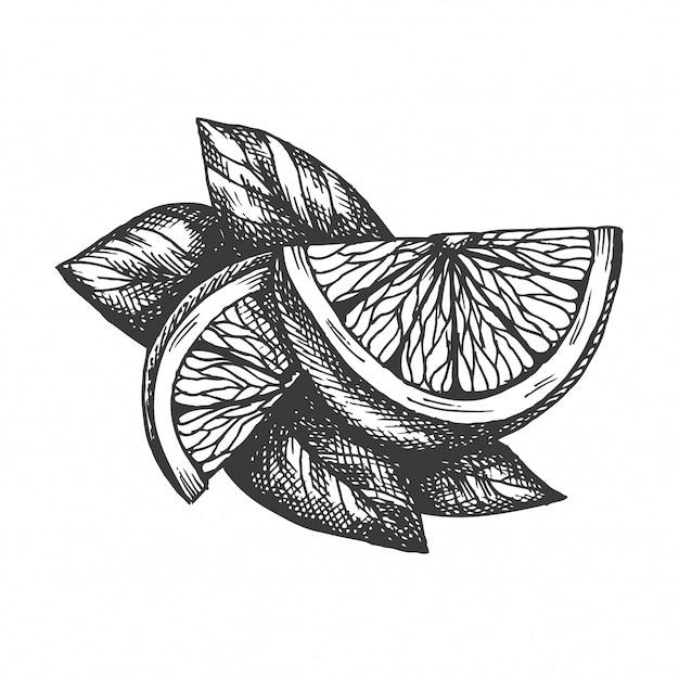 Hand gezeichnete zitronenillustration im weinlesestil Premium Vektoren