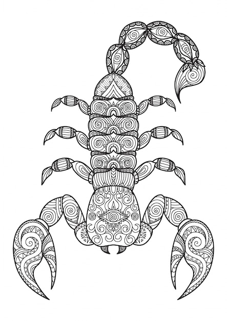 Hand Gezeichneten Skorpion Hintergrund Download Der Kostenlosen Vektor