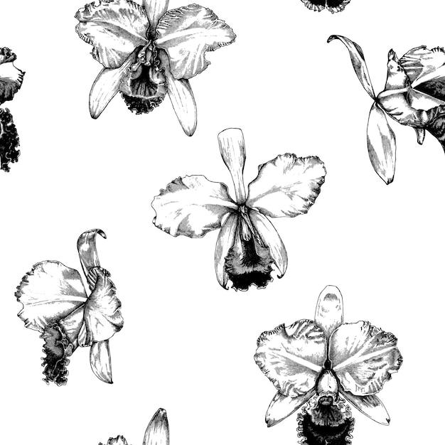 Hand gezeichneter cattleya-orchideen-blumen-muster-hintergrund Premium Vektoren