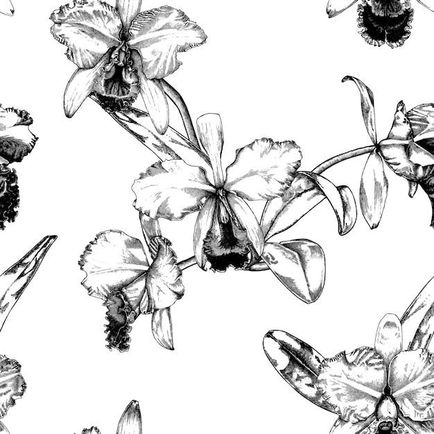 a126c7b7c5c745 Hand gezeichneter cattleya-orchideen-blumen-muster-hintergrund Premium  Vektoren