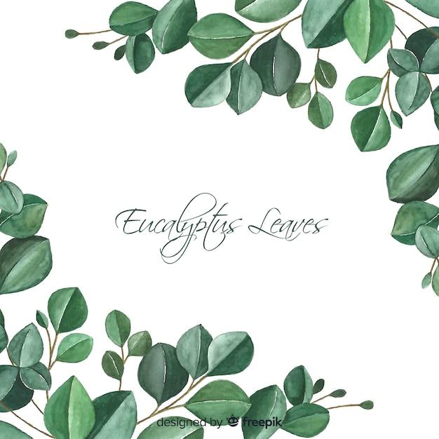 Hand gezeichneter eukalyptus verlässt hintergrund Kostenlosen Vektoren