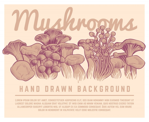Hand gezeichneter pilzhintergrund. champignon-austernpilz-skizzenillustration der feinschmeckerischen trüffeln des herbstes Premium Vektoren
