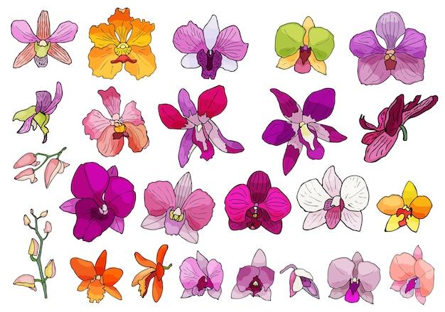 Hand gezeichneter satz orchideenblumen. Premium Vektoren