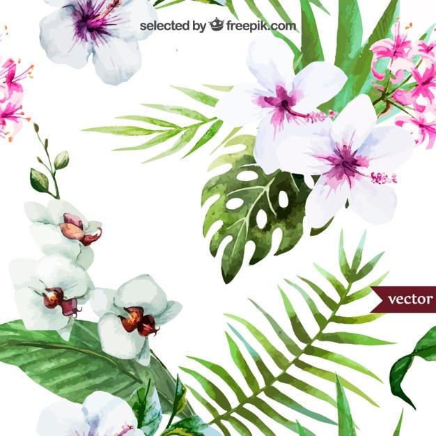 Handgemalte tropischen Pflanzen Kostenlose Vektoren