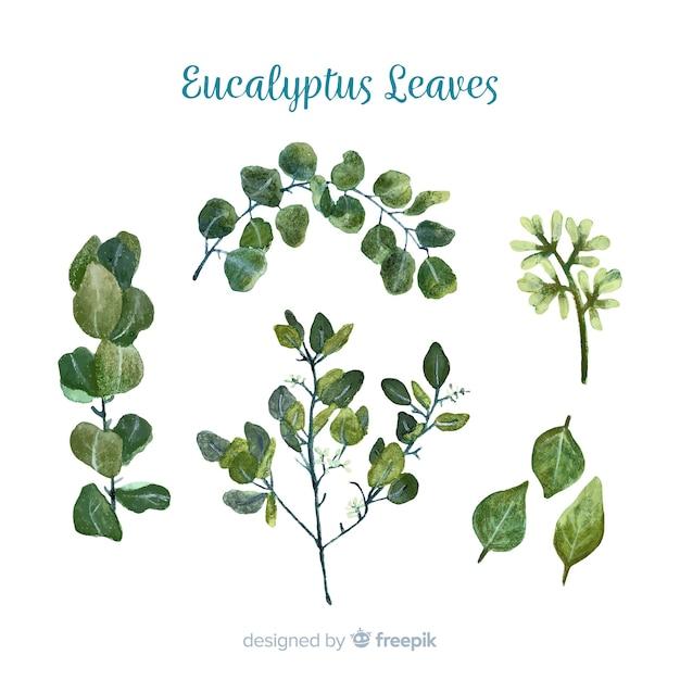Handgezeichnete eukalyptus verzweigt sammlung Kostenlosen Vektoren