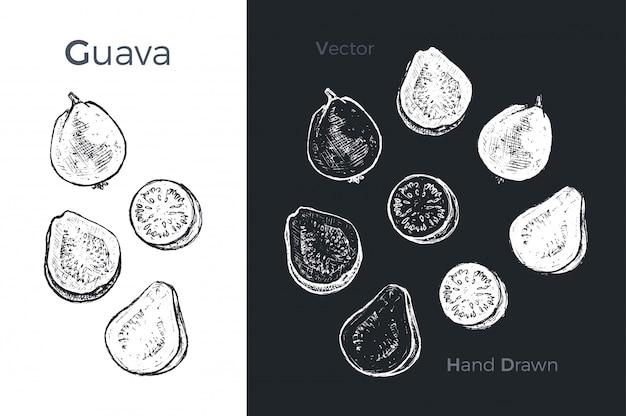 Handgezeichnete guave symbole. Premium Vektoren