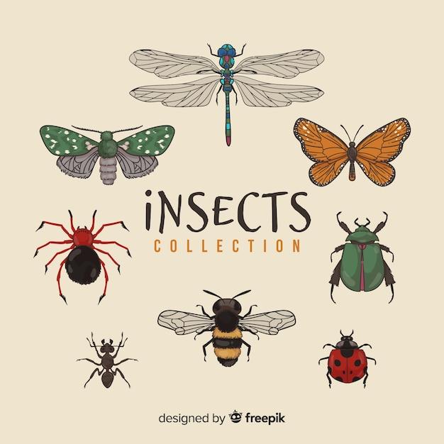 Handgezeichnete insektenpackung Premium Vektoren