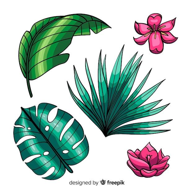 handgezeichnete tropische blumen und blätter | kostenlose
