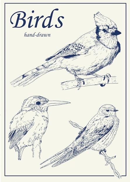 Handgezeichnete vögel packen Premium Vektoren