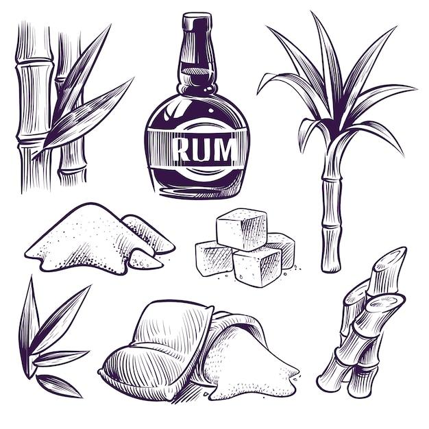 Handgezeichnetes zuckerrohr. zuckerrohr süße blätter, zuckerpflanzenstiele, bauernhofernte, rumglas und flasche. vintage gravur Premium Vektoren