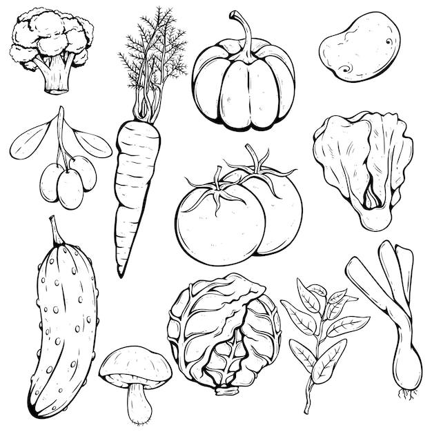 Handzeichnung satz von frischem gemüse mit tomaten, kürbis, kohl Premium Vektoren