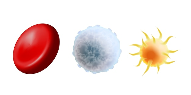 Hauptblutzellen im maßstab - erythrozyten, thrombozyten und leukozyten. rote blutkörperchen, weiße blutkörperchen und blutplättchen auf weißem hintergrund. illustration Premium Vektoren